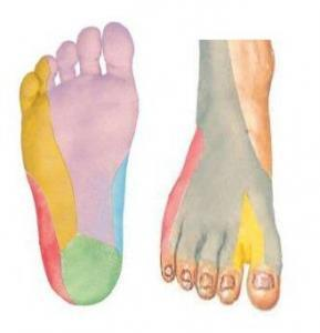Zenuwen in de voet